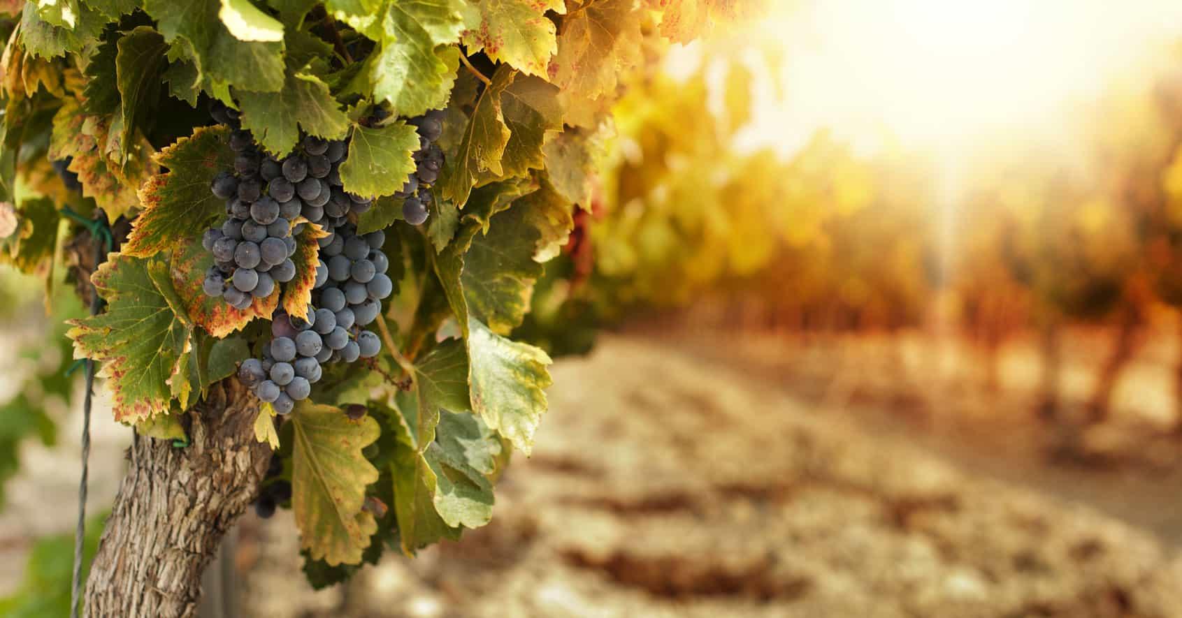 Primorska, vinorodni okoliš Kras