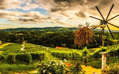 Slovenska vina in vinorodni okoliši