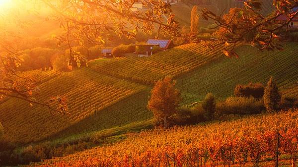 Slovenski vinorodni okoliš Podravje, Štajerska, Maribor